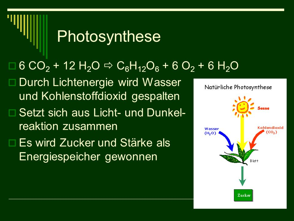 Photosynthese 6 CO2 + 12 H2O  C6H12O6 + 6 O2 + 6 H2O