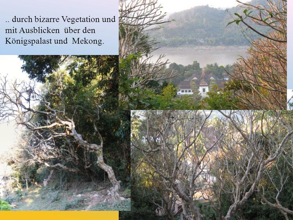 .. durch bizarre Vegetation und mit Ausblicken über den Königspalast und Mekong.