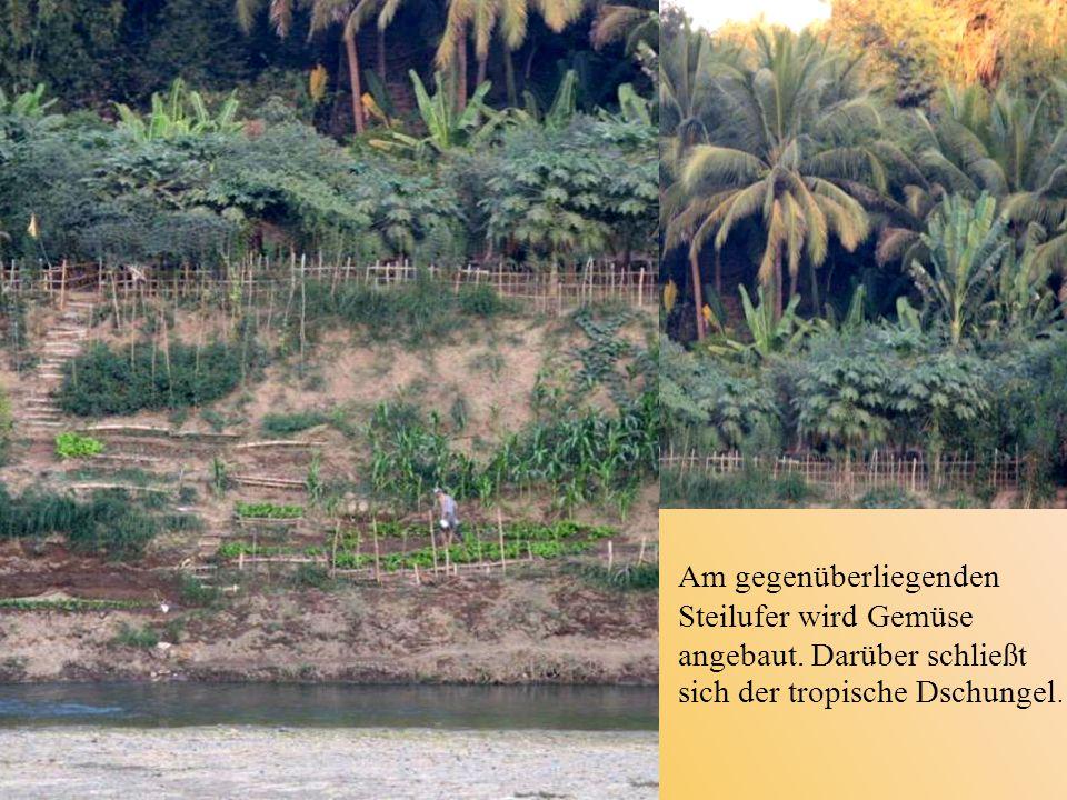 Am gegenüberliegenden Steilufer wird Gemüse angebaut