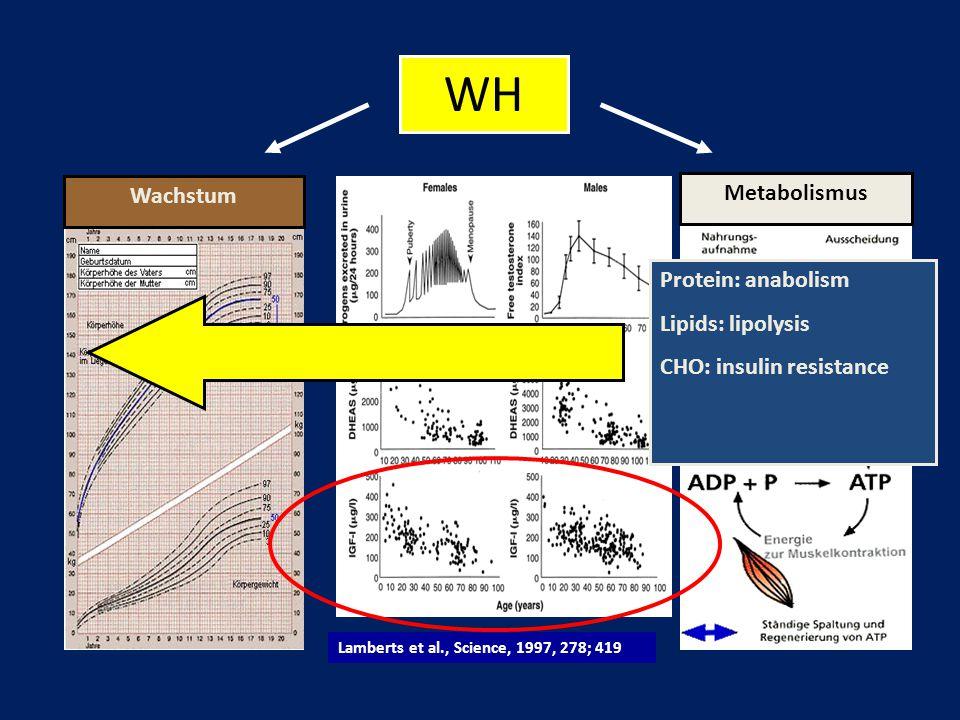 WH Wachstum Metabolismus Protein: anabolism Lipids: lipolysis