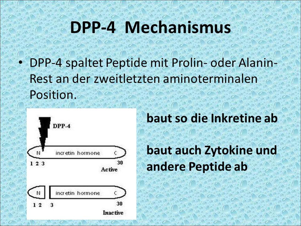 DPP-4 Mechanismus DPP-4 spaltet Peptide mit Prolin- oder Alanin- Rest an der zweitletzten aminoterminalen Position.