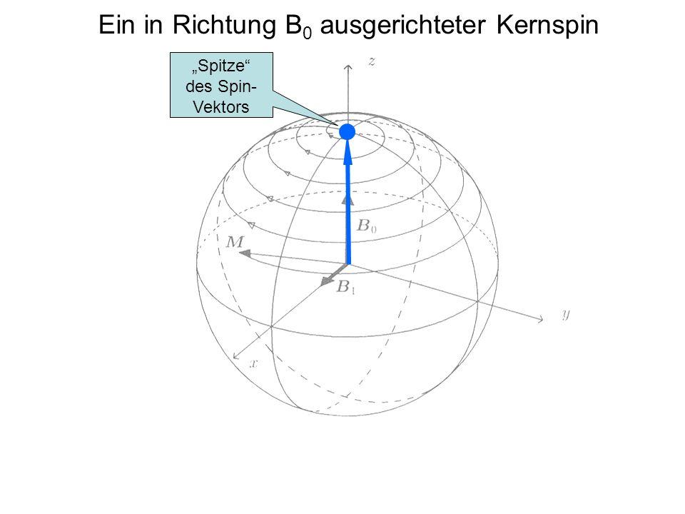 Ein in Richtung B0 ausgerichteter Kernspin