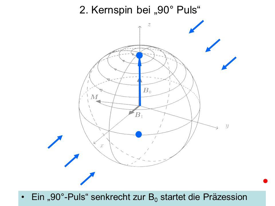"""2. Kernspin bei """"90° Puls Ein """"90°-Puls senkrecht zur B0 startet die Präzession"""