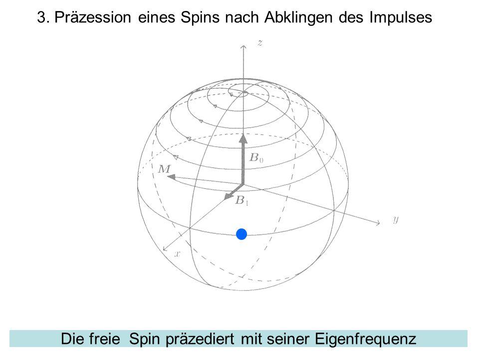 3. Präzession eines Spins nach Abklingen des Impulses
