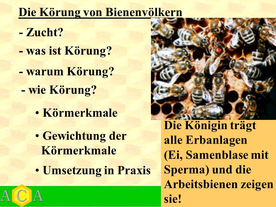 Die Körung von Bienenvölkern