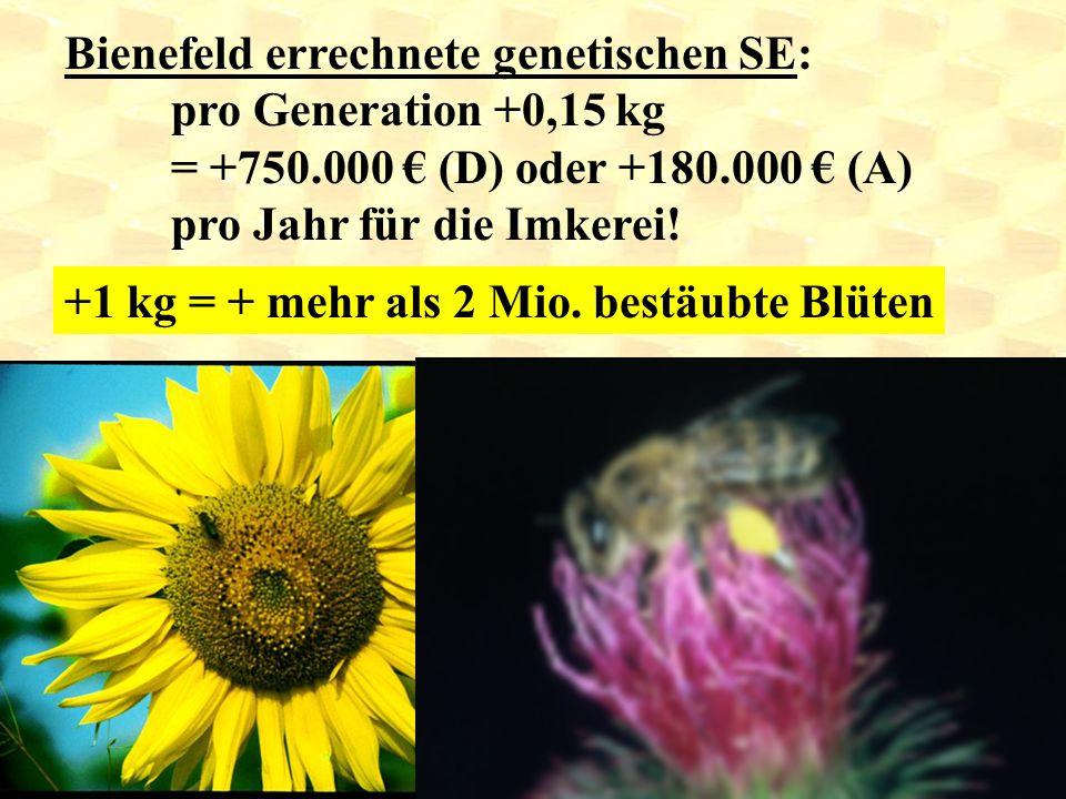 Bienefeld errechnete genetischen SE: