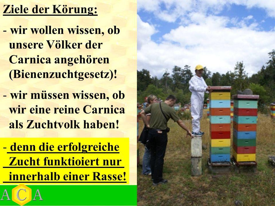 Ziele der Körung: wir wollen wissen, ob. unsere Völker der. Carnica angehören. (Bienenzuchtgesetz)!