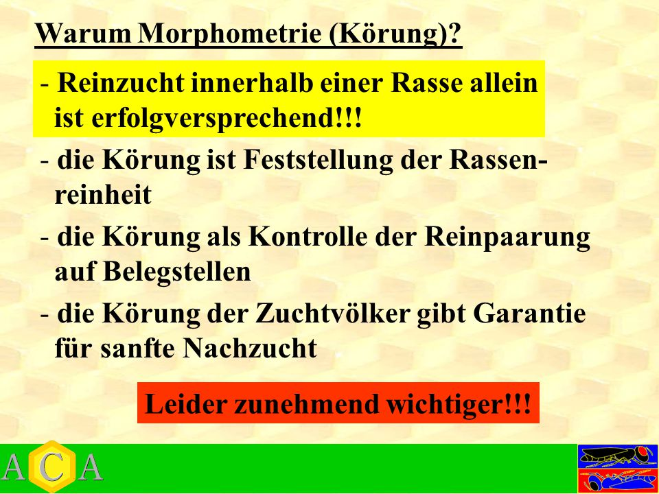 Warum Morphometrie (Körung)