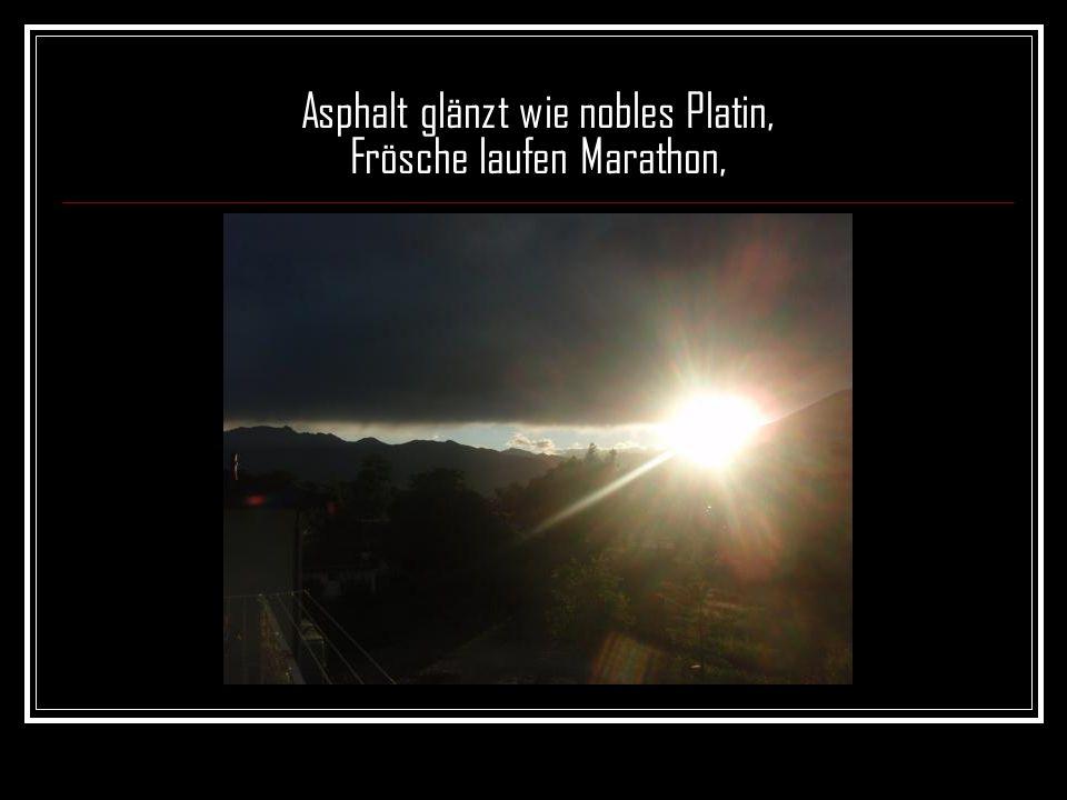 Asphalt glänzt wie nobles Platin, Frösche laufen Marathon,