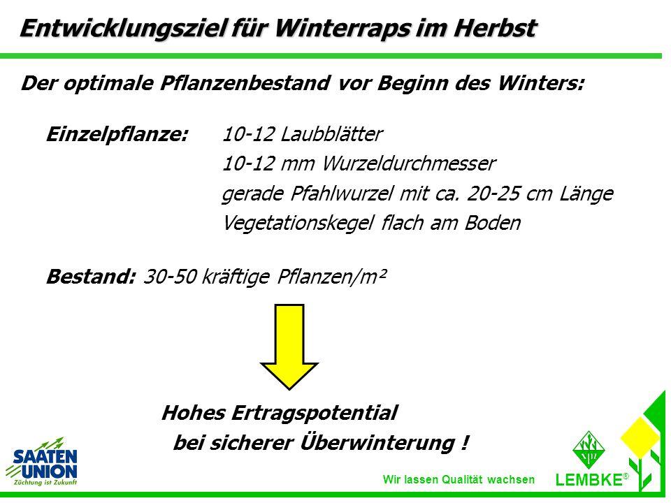Entwicklungsziel für Winterraps im Herbst