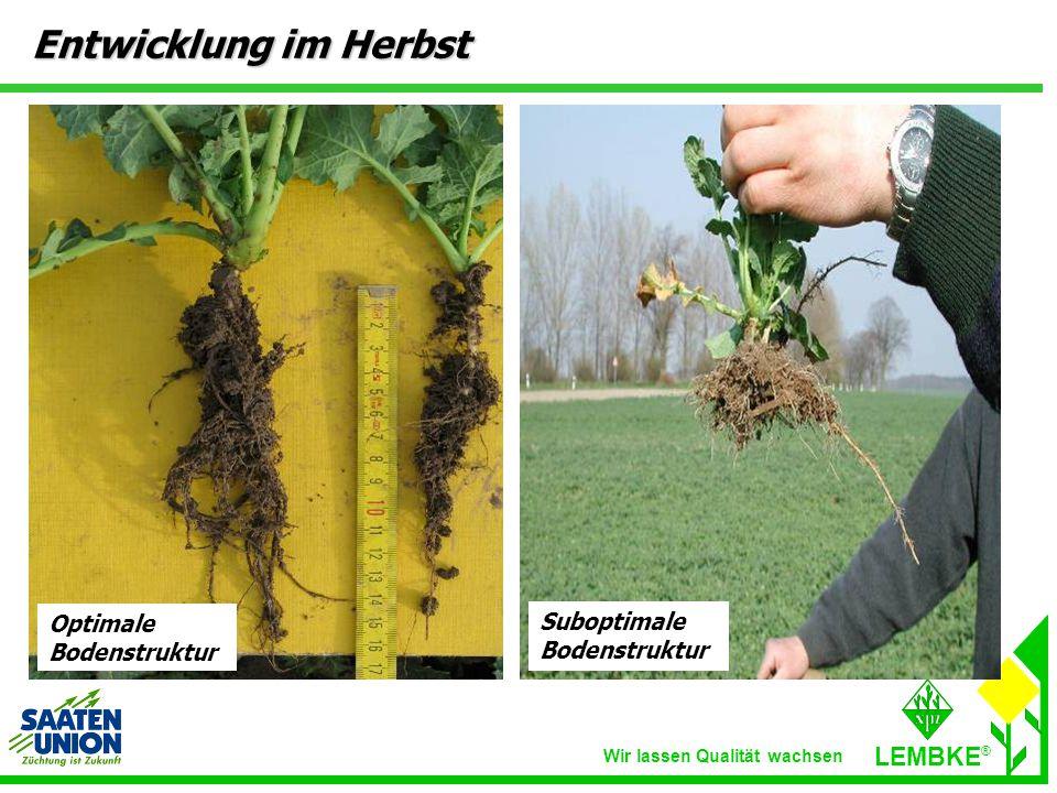 Entwicklung im Herbst Optimale Bodenstruktur Suboptimale Bodenstruktur