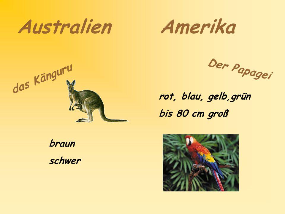 Australien Amerika Der Papagei das Känguru rot, blau, gelb,grün