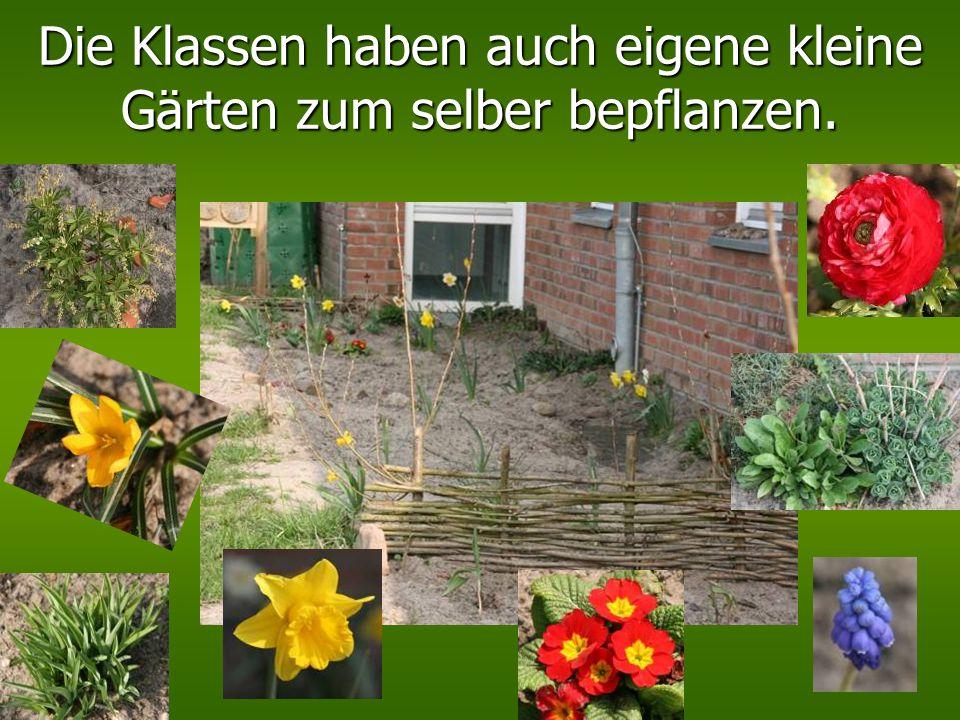 Die Klassen haben auch eigene kleine Gärten zum selber bepflanzen.