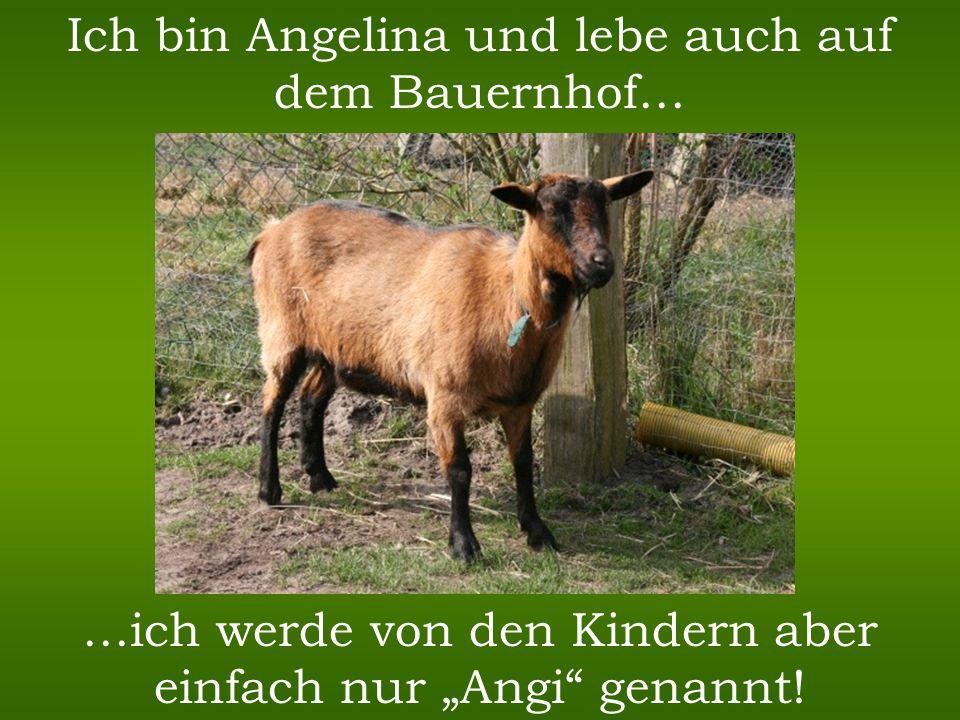 Ich bin Angelina und lebe auch auf dem Bauernhof…