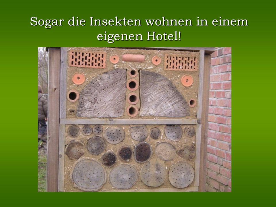 Sogar die Insekten wohnen in einem eigenen Hotel!