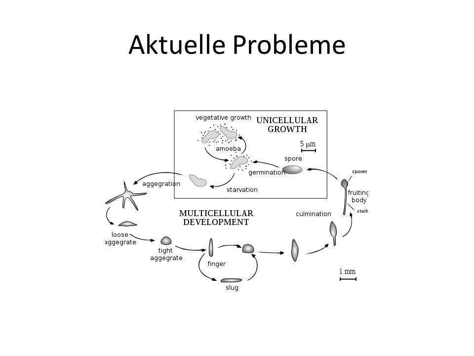 Aktuelle Probleme