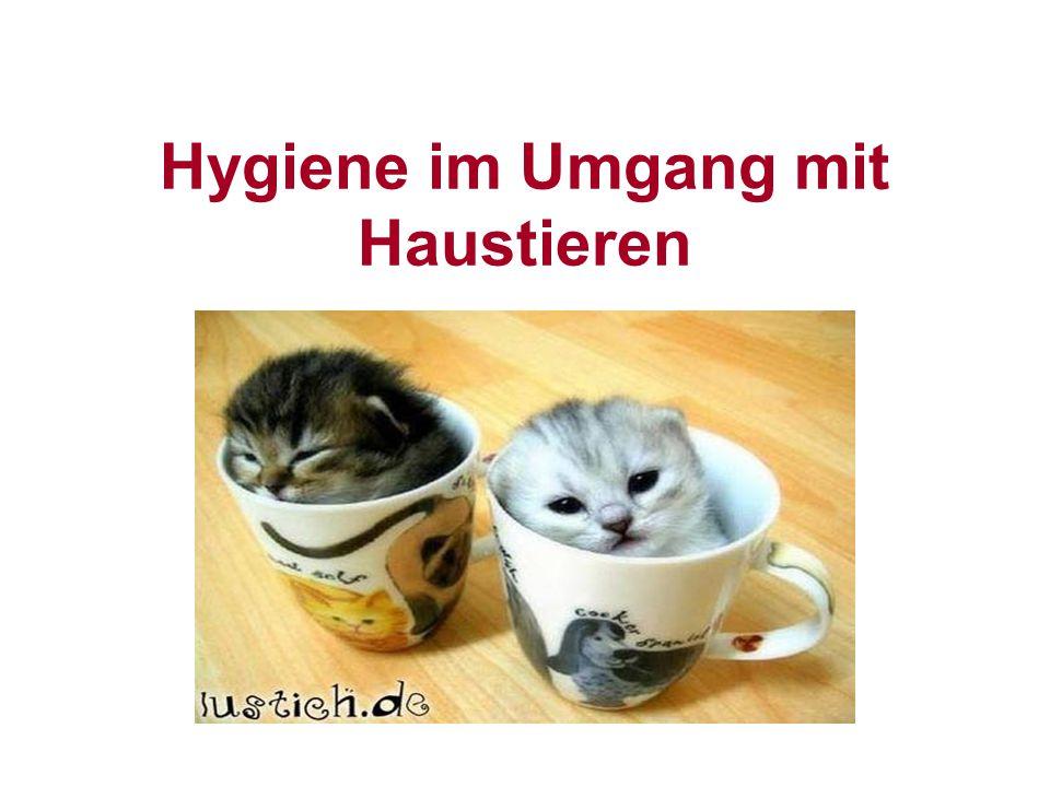 Hygiene im Umgang mit Haustieren