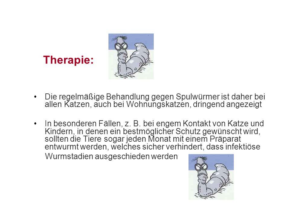 Therapie: Die regelmäßige Behandlung gegen Spulwürmer ist daher bei allen Katzen, auch bei Wohnungskatzen, dringend angezeigt.