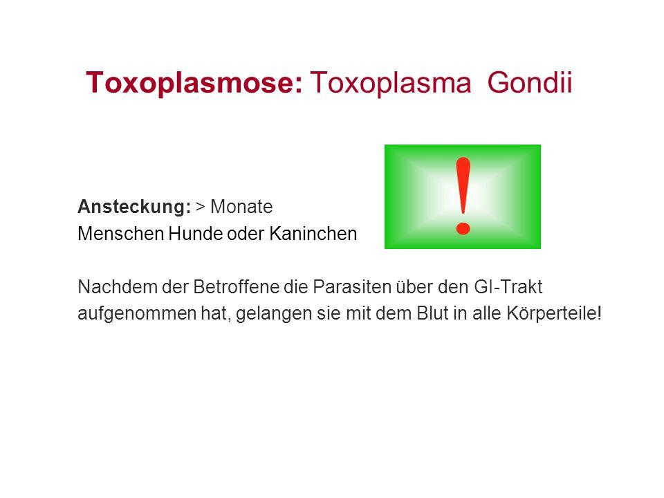 Toxoplasmose: Toxoplasma Gondii