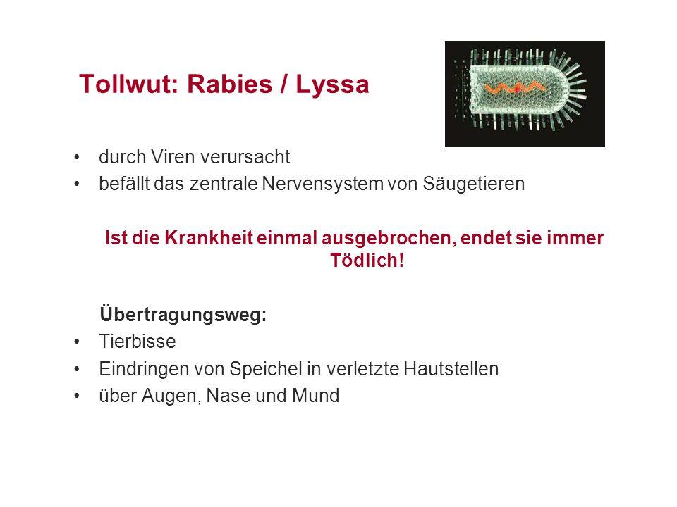 Tollwut: Rabies / Lyssa
