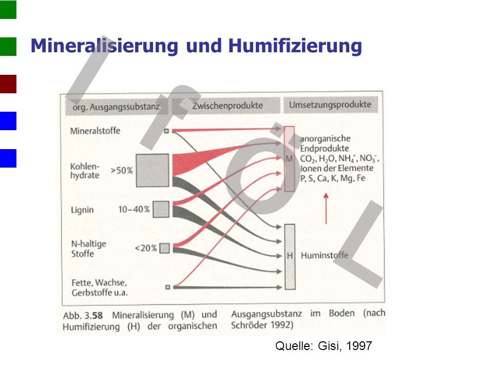Mineralisierung und Humifizierung