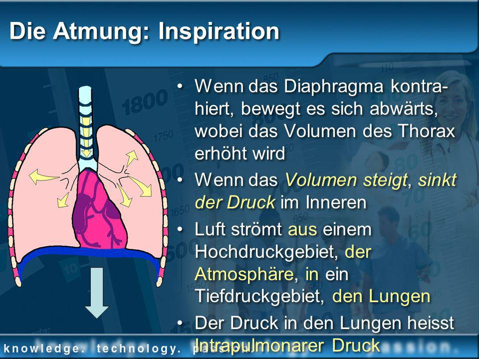 Die Atmung: Inspiration