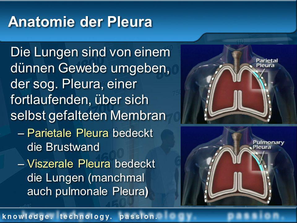 Anatomie der Pleura Die Lungen sind von einem dünnen Gewebe umgeben, der sog. Pleura, einer fortlaufenden, über sich selbst gefalteten Membran.
