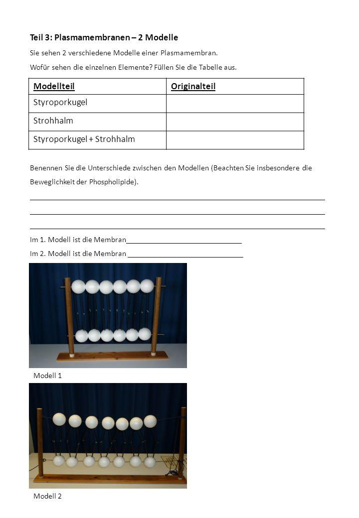 Teil 3: Plasmamembranen – 2 Modelle Modellteil Originalteil