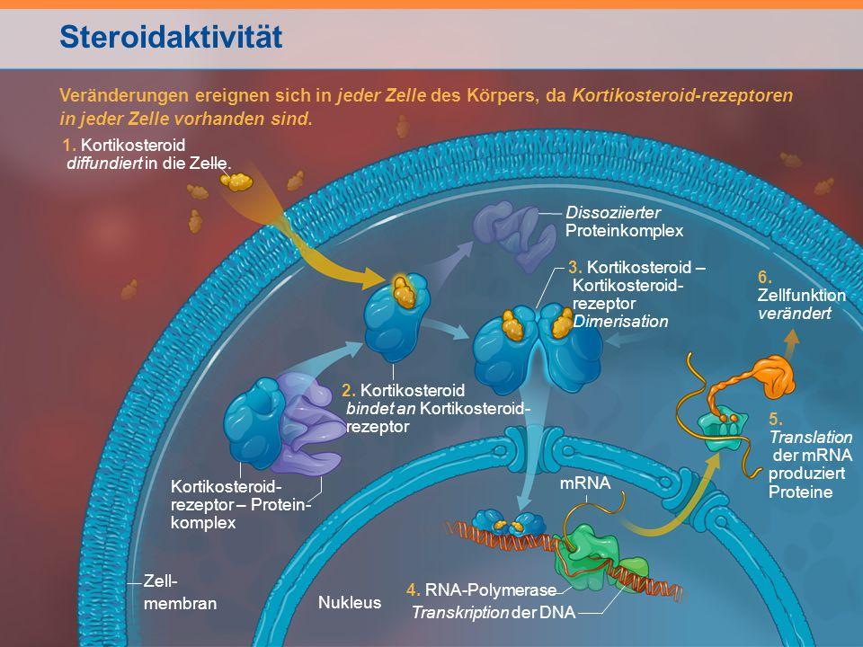 Steroidaktivität Veränderungen ereignen sich in jeder Zelle des Körpers, da Kortikosteroid-rezeptoren.