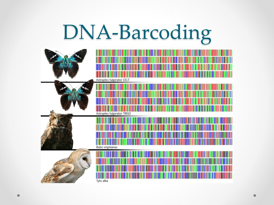 DNA-Barcoding