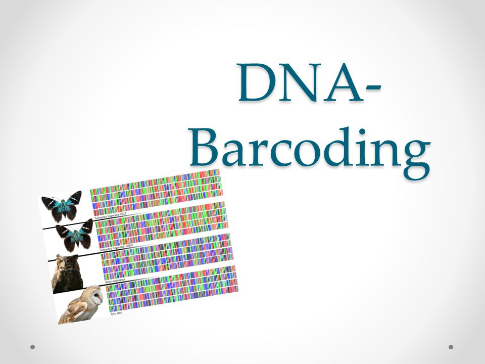 DNA- Barcoding