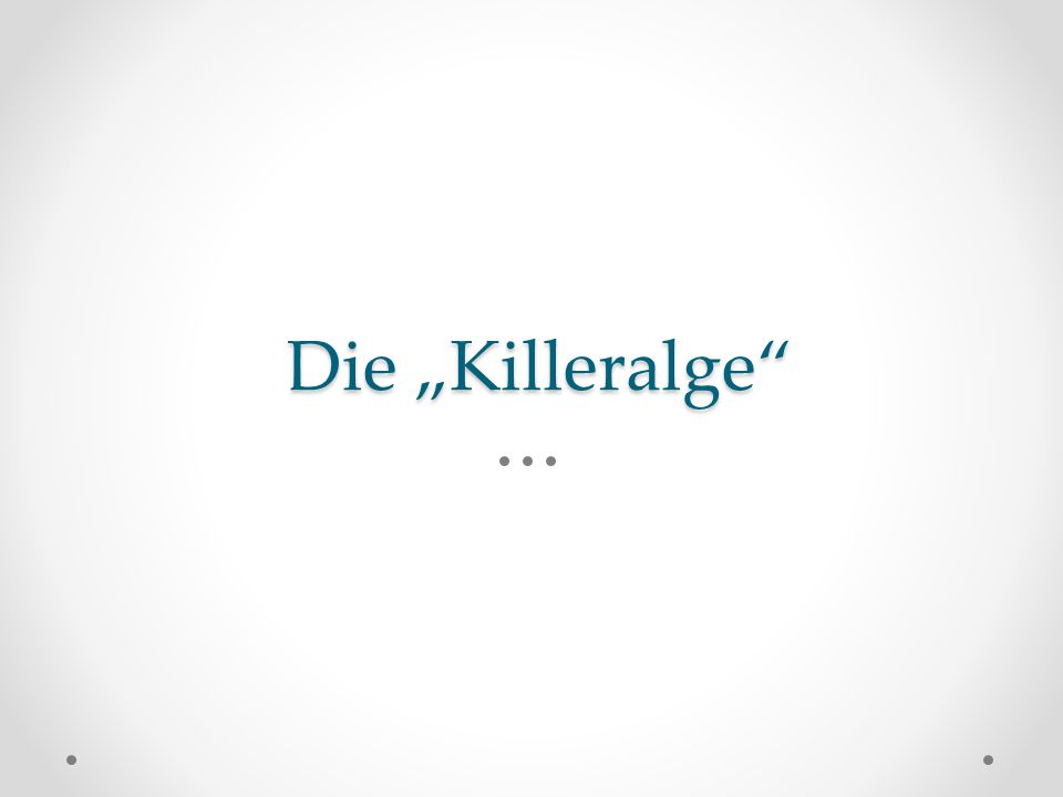 """Die """"Killeralge"""