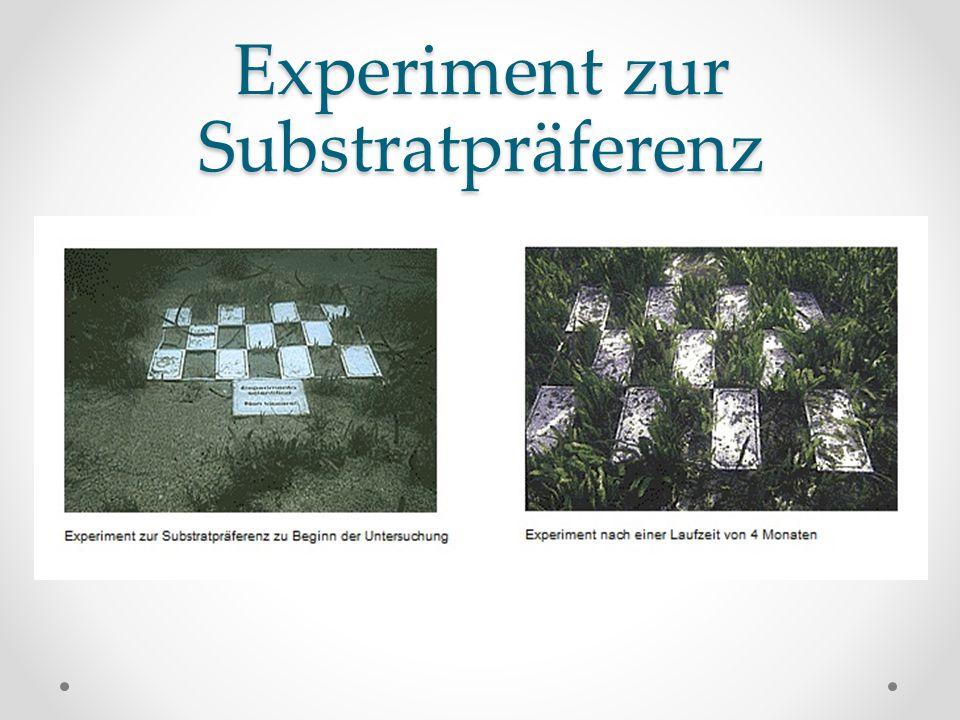 Experiment zur Substratpräferenz