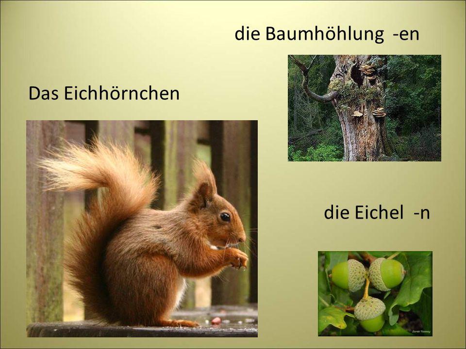 die Baumhöhlung -en Das Eichhörnchen die Eichel -n