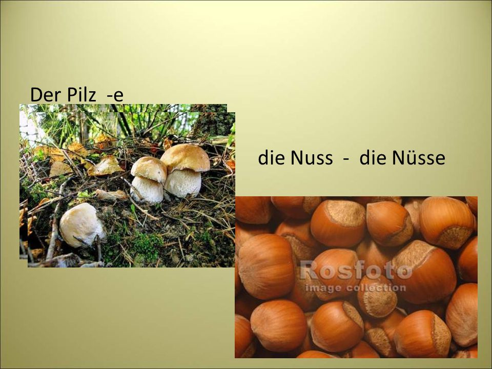 Der Pilz -e die Nuss - die Nüsse