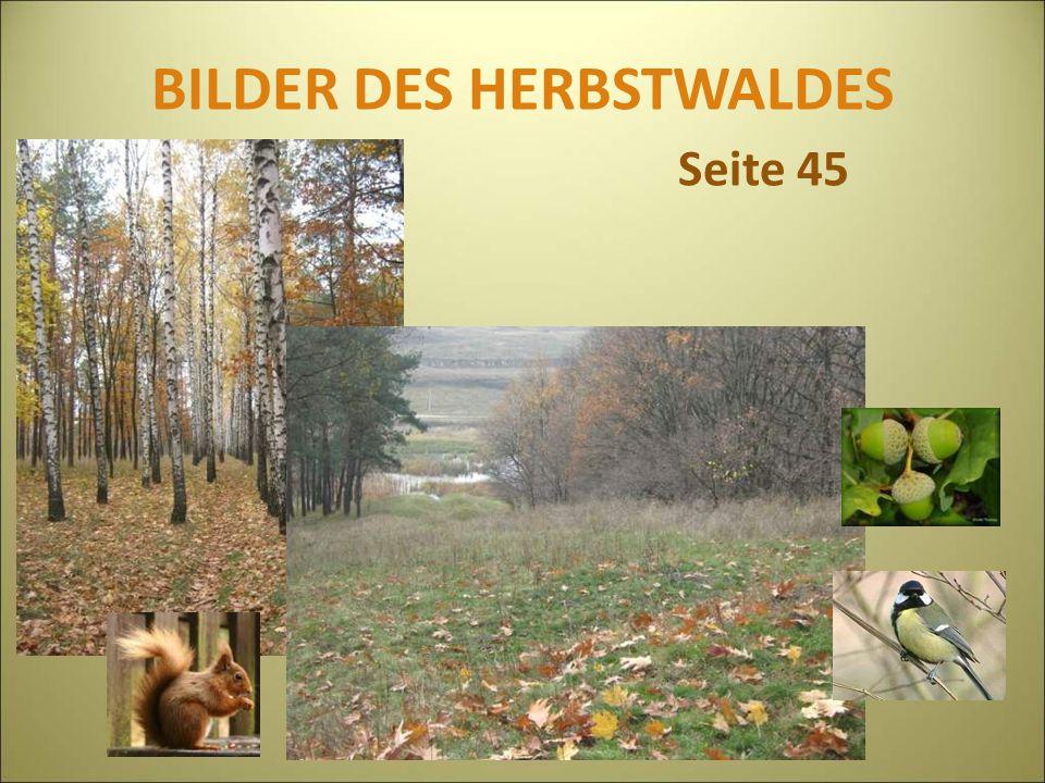 BILDER DES HERBSTWALDES Seite 45