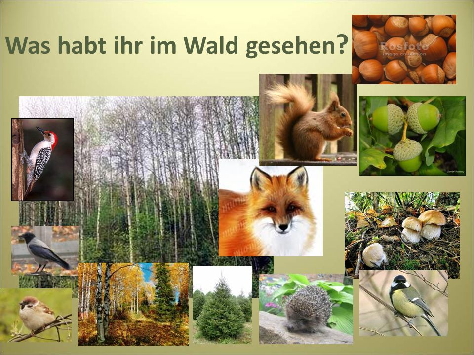 Was habt ihr im Wald gesehen