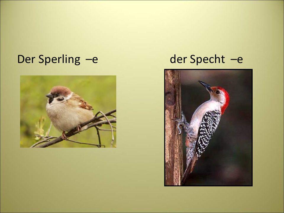 Der Sperling –e der Specht –e