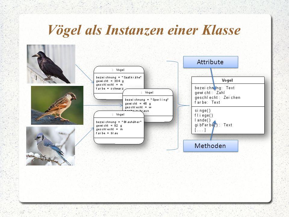 Vögel als Instanzen einer Klasse