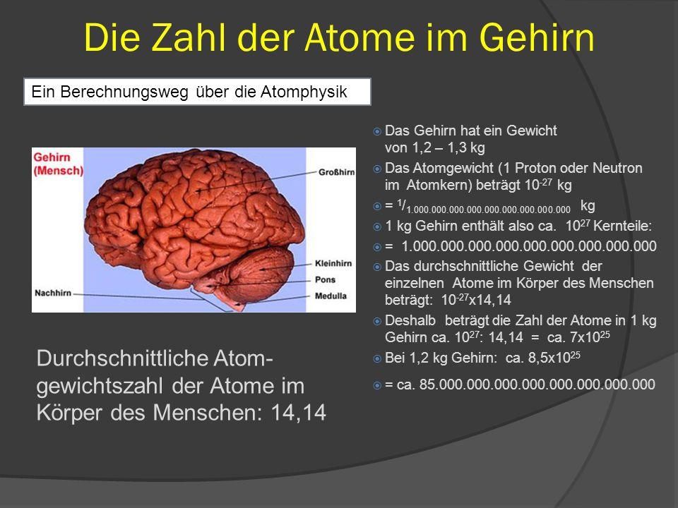 Die Zahl der Atome im Gehirn