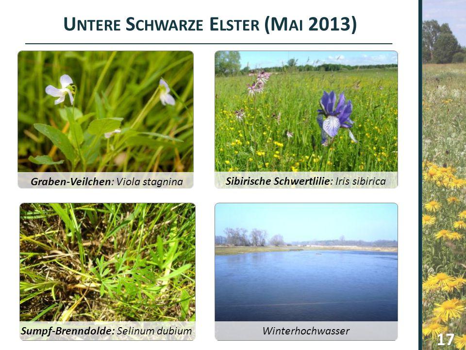 Untere Schwarze Elster (Mai 2013)