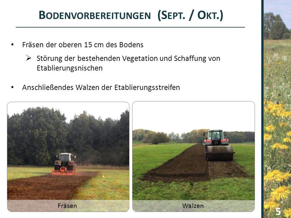 Bodenvorbereitungen (Sept. / Okt.)