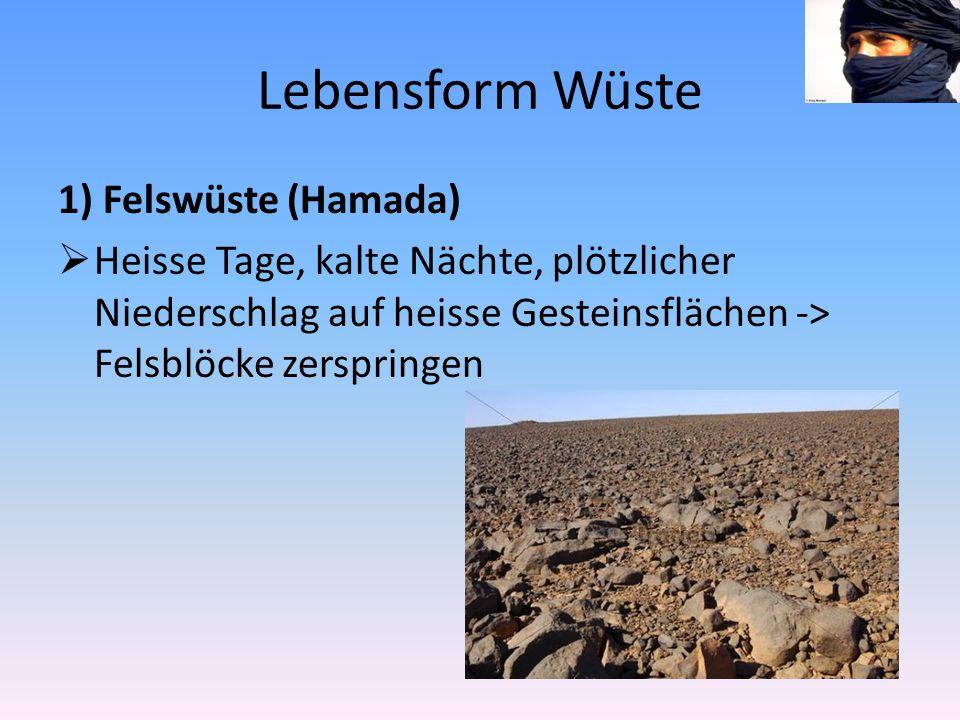 Lebensform Wüste 1) Felswüste (Hamada)