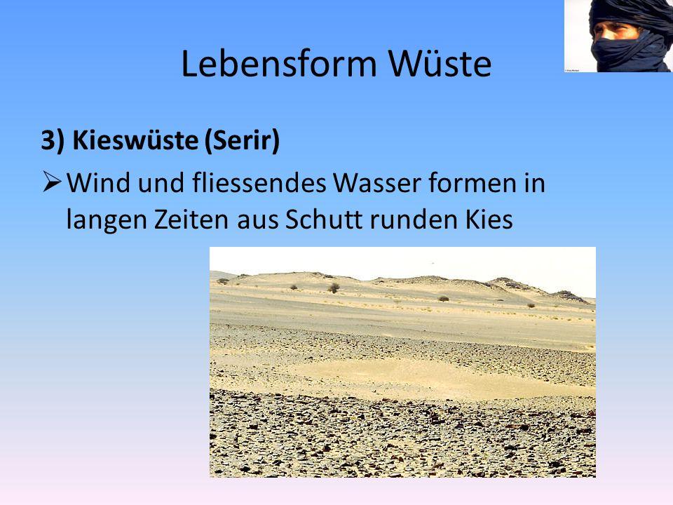 Lebensform Wüste 3) Kieswüste (Serir)