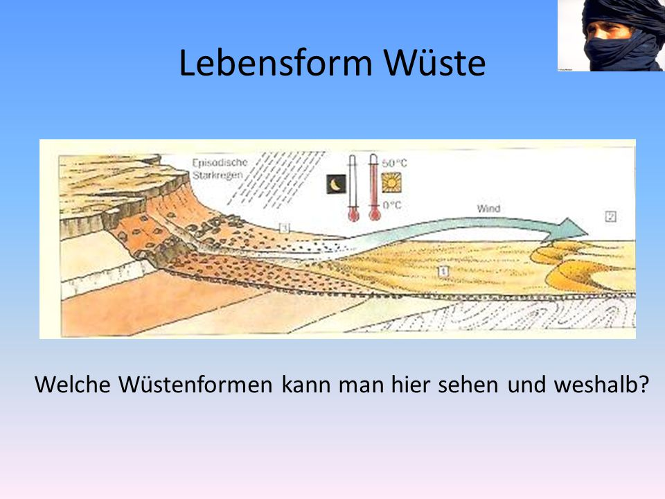 Lebensform Wüste Welche Wüstenformen kann man hier sehen und weshalb