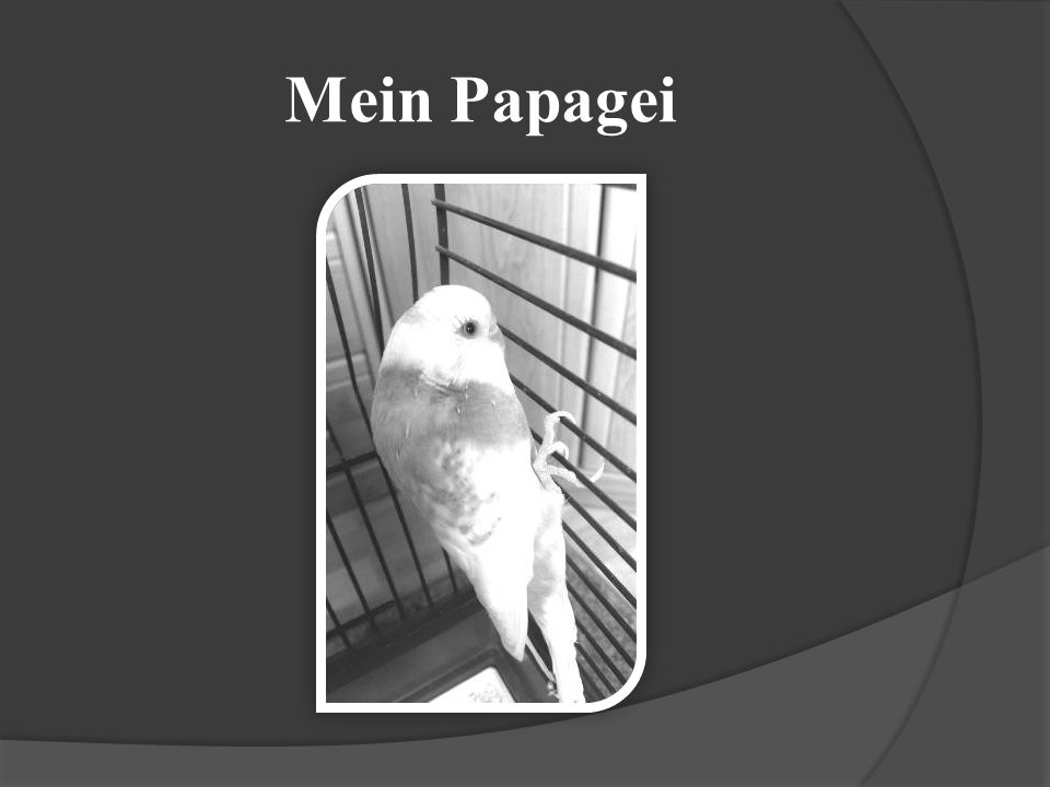 Mein Papagei