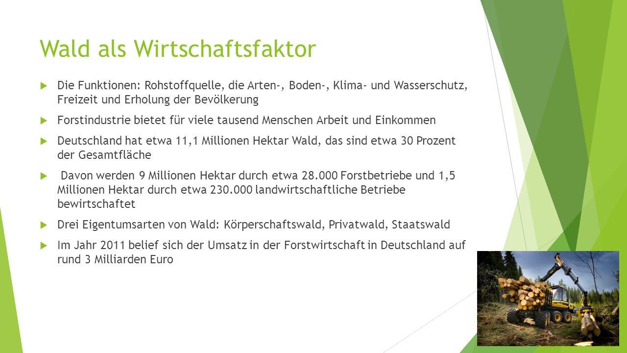 Wald als Wirtschaftsfaktor