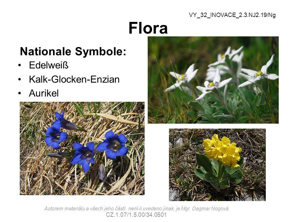Flora Nationale Symbole: Edelweiß Kalk-Glocken-Enzian Aurikel