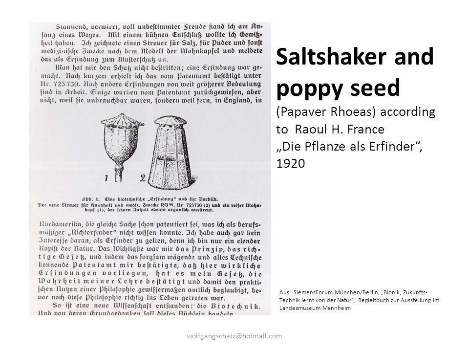 Saltshaker and poppy seed (Papaver Rhoeas) according to Raoul H