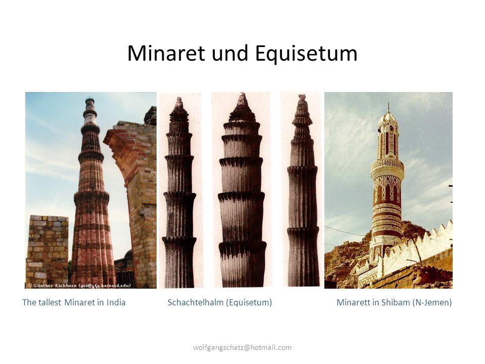 Minaret und Equisetum The tallest Minaret in India Schachtelhalm (Equisetum) Minarett in Shibam (N-Jemen)